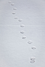 Beyond snowman-tracks