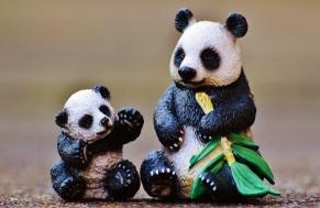 panda-1160861